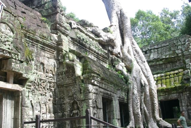 Ta Prohm temple in Siemreap